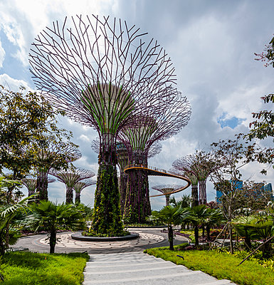 Supertrees in Gardens by the Bay in Singapore. - p855m908979 by Mike Kirk