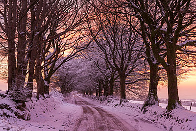 Snowy tree lined country lane at sunrise in winter, Exmoor National Park, Somerset, England, United Kingdom, Europe - p871m1017469 by Adam Burton