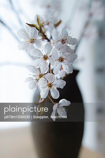 Zierkirschenblüten - p979m1036030 von Baeppler, Mechthild