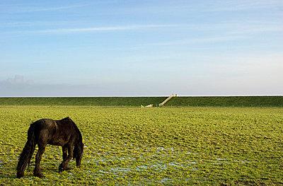 Terschelling polder - p1132m1020442 by Mischa Keijser