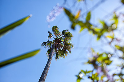 Palm tree - p1291m1465800 by Marcus Bastel
