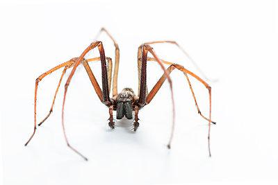 Spider, Arthropoda - p1437m2057034 by Achim Bunz