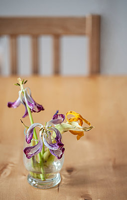 Wilted flowers on table - p971m2087116 by Reilika Landen