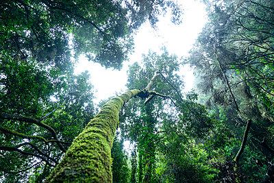 La Palma, Jungle - p427m2148371 by Ralf Mohr
