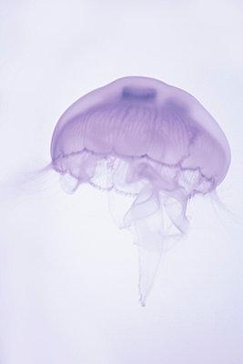 Medusa - p4500486 von Hanka Steidle