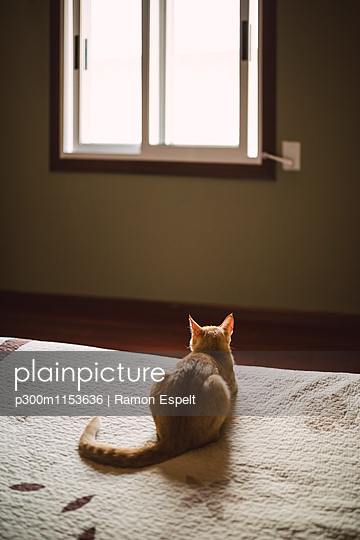 Back view of cat lying on bed looking at window