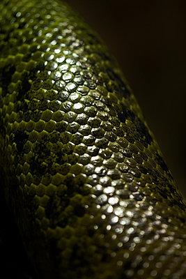 Snake scales - p1028m2245674 von Jean Marmeisse