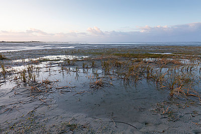 Germany, Bensersiel, coastal landscape - p300m1019363f by Wilfried Wirth