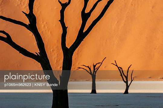 Tote Bäume in der Wüste, Sossusvlei, Namibia, Afrika - p1065m982623 von KNSY Bande