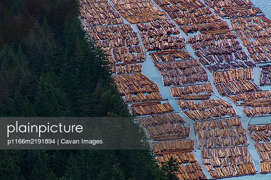 Logging wood floating on water next to forest in Squamish Canada - p1166m2191894 by Cavan Images