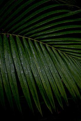 palmwedel - p627m670871 by Chris Keller