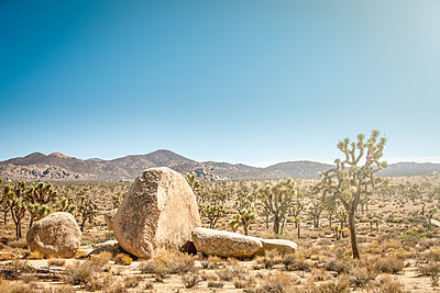 Landschaft Joshua Tree  - p1275m1090702 von cgimanufaktur
