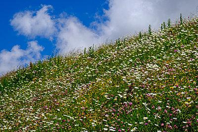 Switzerland, Wallis, Flowering mountain meadow of Val d'Entremont - p300m2275941 by Lisa und Wilfried Bahnmüller