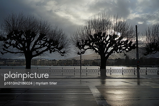 Trees in Geneva by the lake - p1610m2186024 by myriam tirler