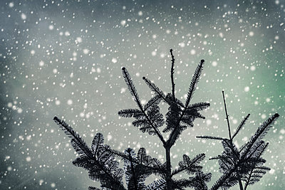 Christmas tree - p1228m1203559 by Benjamin Harte