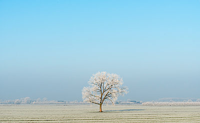 Polder landscape in winter, Meerkerk, South Holland, Netherlands - p429m1226843 by Mischa Keijser