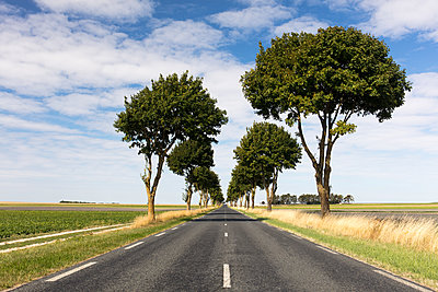 A straight section of the Liberty Road (La Voie de la Liberte) on a sunny day with blue skies, near Reims, France - p871m2069193 by Ed Hasler