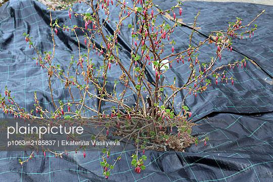 Botanical garden  - p1063m2185837 by Ekaterina Vasilyeva