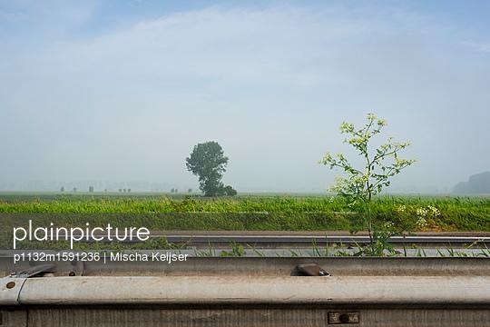 Plants between crash barrier - p1132m1591236 by Mischa Keijser