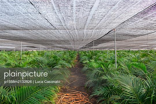 A huge palm tree garden centre - p1558m2132826 by Luca Casonato