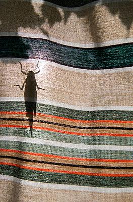 Grasshopper - p1013m853244 by G. Bursac