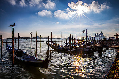 Venice - p1062m1039725 by Viviana Falcomer