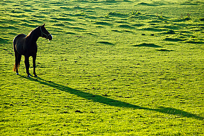 Horse - p1501m2071096 by Alexander Sommer