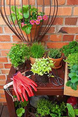 Various potted spice plants on terrace - p300m2080335 by Gaby Wojciech