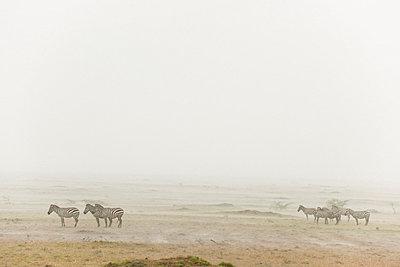 Masai Mara National Park - p5330337 by Böhm Monika