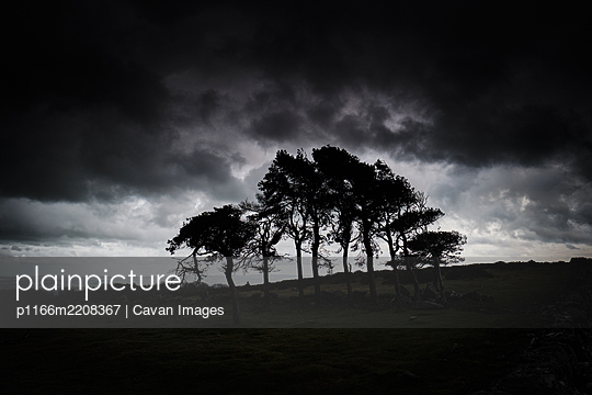 Silhouette of Trees, Cloudy, Wide Angle Shot - p1166m2208367 by Cavan Images