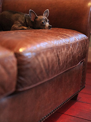 Kleine Pause auf der Couch - p045m1115493 von Jasmin Sander