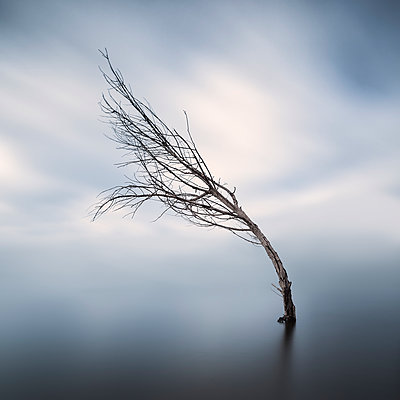 Bent bare tree standing in lake at wintertime - p300m1228036 by Xose Casal