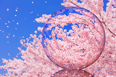 Glass globe and cherry blossoms - p307m961738f by Lee Seung Hun