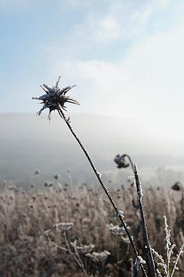 Sonnenblumen im Winter - p470m1207915 von Ingrid Michel
