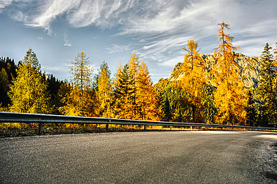 Rural asphalt road and Larch trees on an Autumn day - p968m1028403 by roberto pastrovicchio