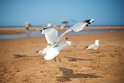Seagull - p1169m1124046 by Tytia Habing