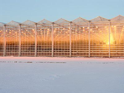 Greenhouse - p1188m1002899 by Henk Wildschut