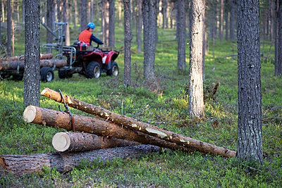 Logs in forest - p312m1495876 by Fredrik Ludvigsson