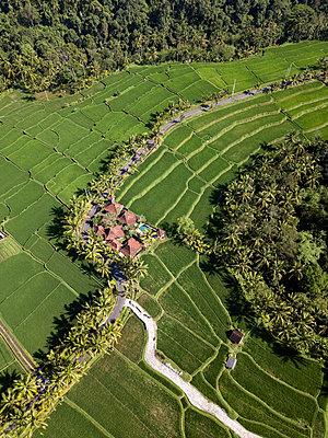 Indonesia, Bali, Ubud, Aerial view of rice fields - p300m2042706 by Konstantin Trubavin