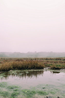 Upland moor in autumn - p597m1332405 by Tim Robinson
