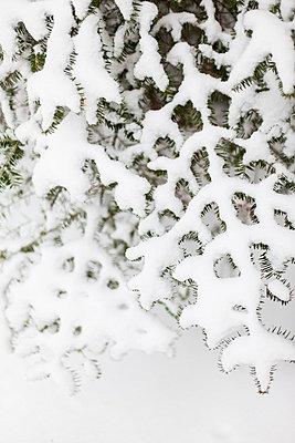 Neuer Schnee - p756m787456 von Bénédicte Lassalle
