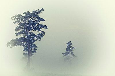 Nebel - p829m919006 von Régis Domergue