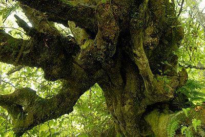 Wald - p56711178 von Le Cercle Rouge