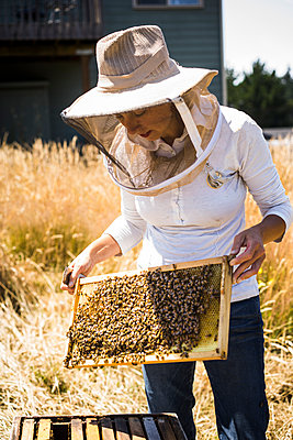 Female beekeeper examining honeycomb frame at field - p1166m1508428 by Cavan Images