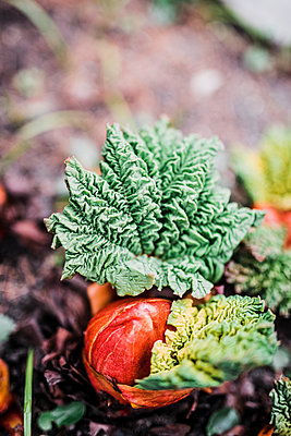 Plant growing in garden - p312m1570583 by Rebecca Wallin
