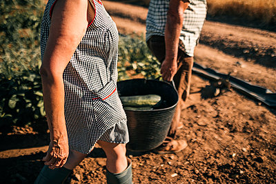 Senior coworkers holding vegetable basket while walking on field - p300m2293523 by LUPE RODRIGUEZ