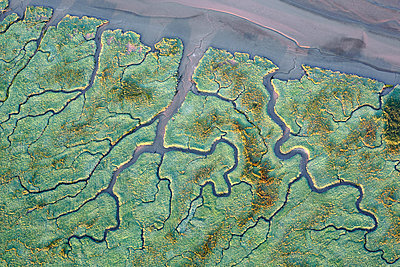 Channels in delta, Saeftinghe, Belgium - p884m1356899 by Wouter Pattyn/ Buiten-beeld