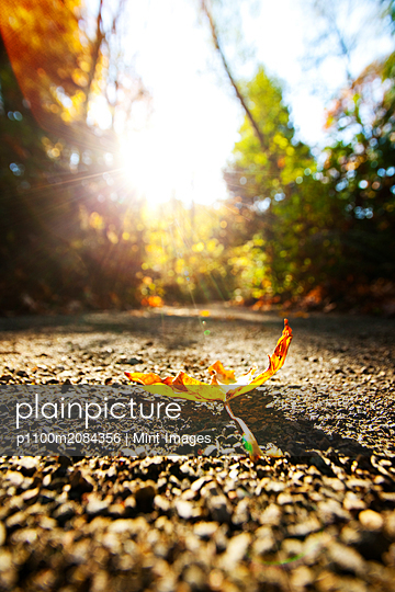 Close up of autumn leaf on dirt path,Seattle, Washington, USA - p1100m2084356 by Mint Images