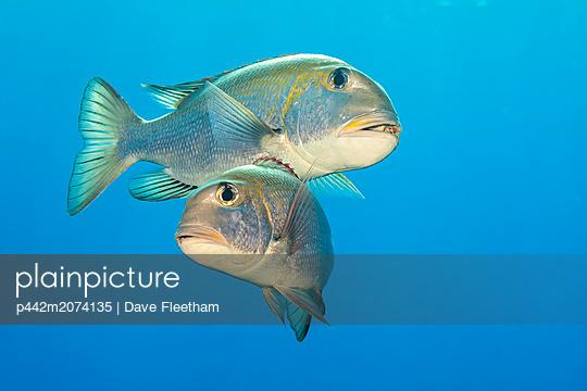 p442m2074135 von Dave Fleetham