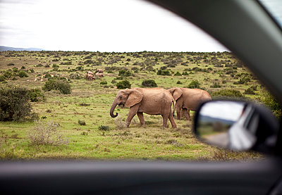 National Park, South Africa - p075m1025503 by Lukasz Chrobok
